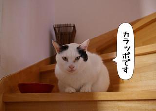 Shirokuro1311_6
