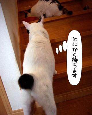 Shirokuro1311_8