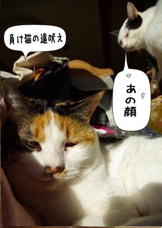 Shirokuro1404_4