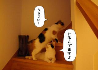 Shirokuro1407_2_2