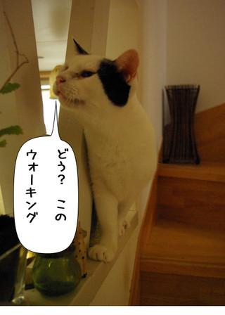 Shirokuro1409_4