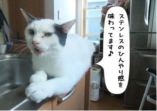 Shirokuro14103_